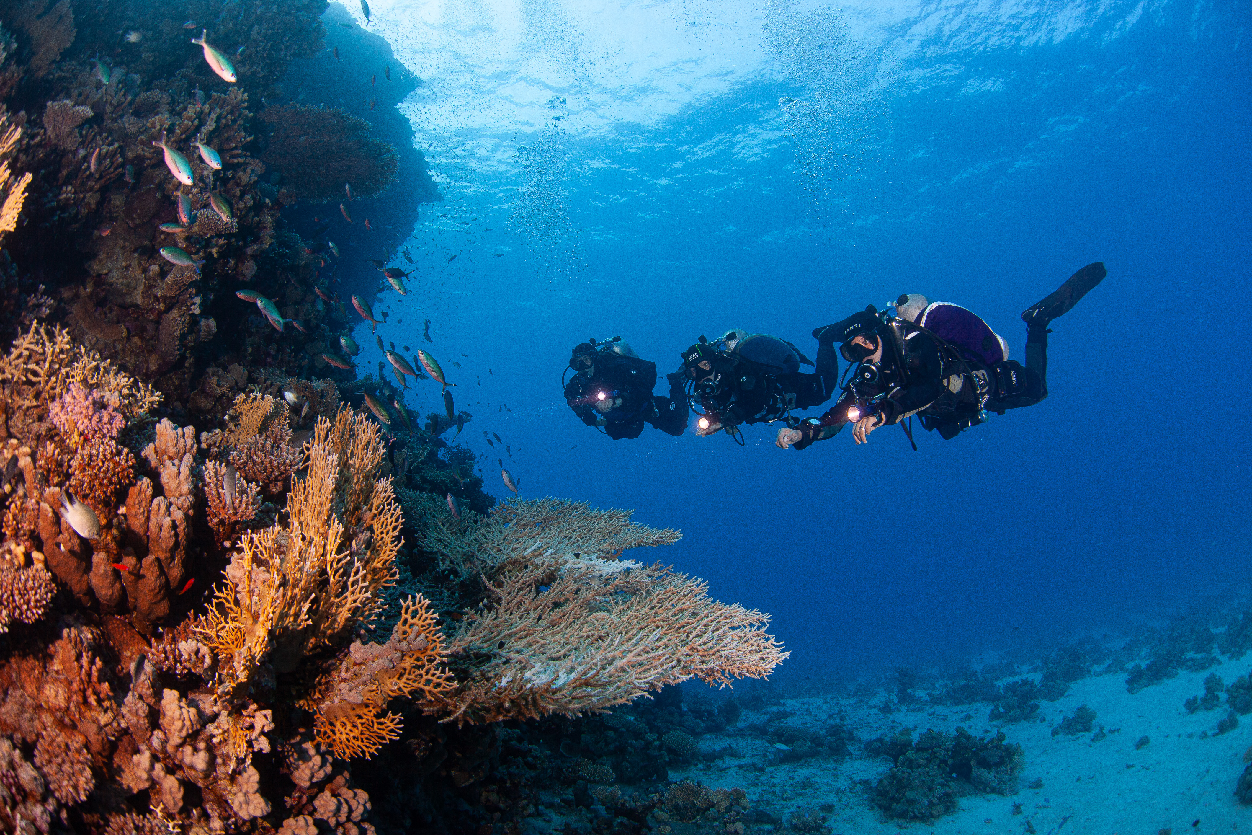 Dive for Antibiotics: SEARCHING THE OCEAN FOR novel antimicrobials